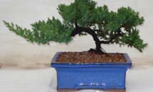 Bonsai Assortments