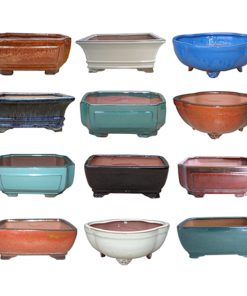 Professional Bonsai Pot Assortment.